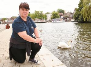Swan rehabilitation centre would be a 'dream come true' for charity founder